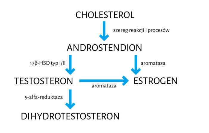 Schemat stereoidogenezy